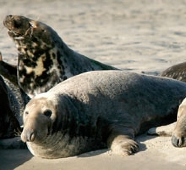 Beachcomber Seal Tours